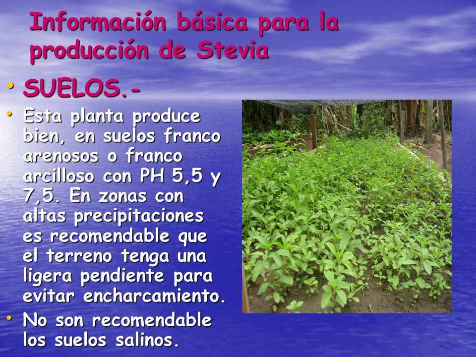Información básica para la producción de Stevia