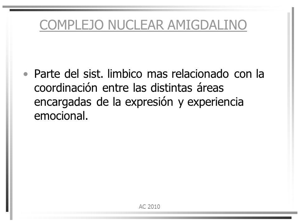 COMPLEJO NUCLEAR AMIGDALINO