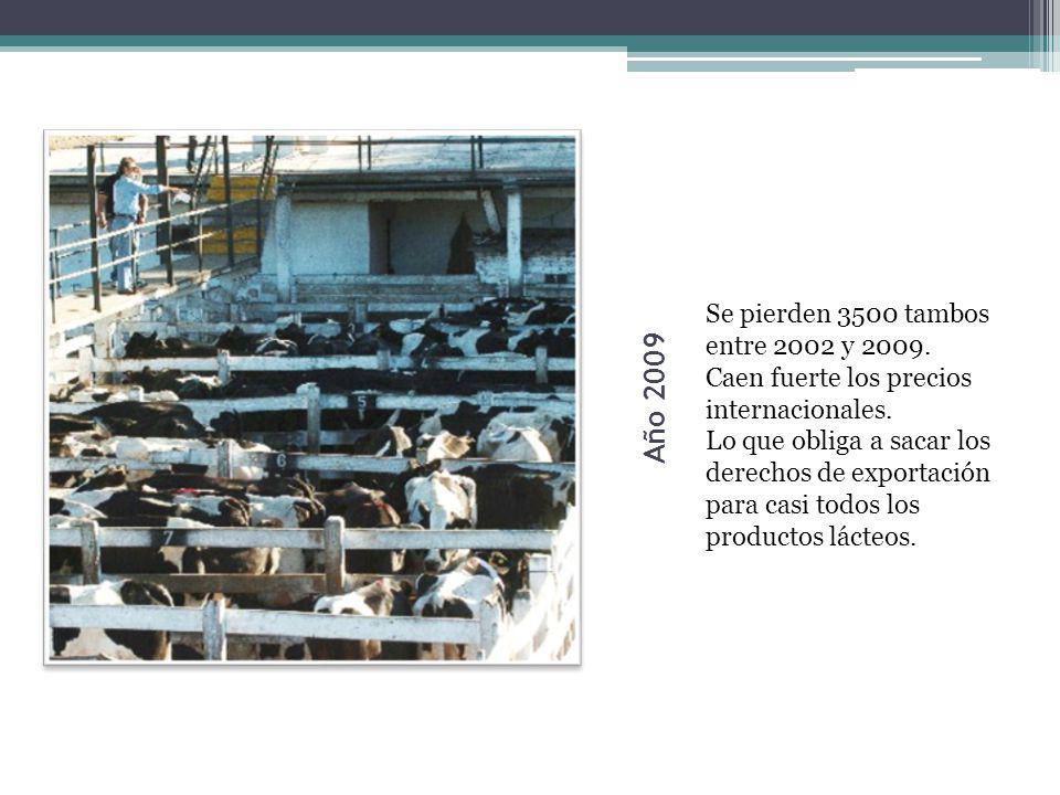Año 2009 Se pierden 3500 tambos entre 2002 y 2009.
