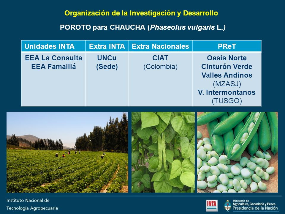 Organización de la Investigación y Desarrollo