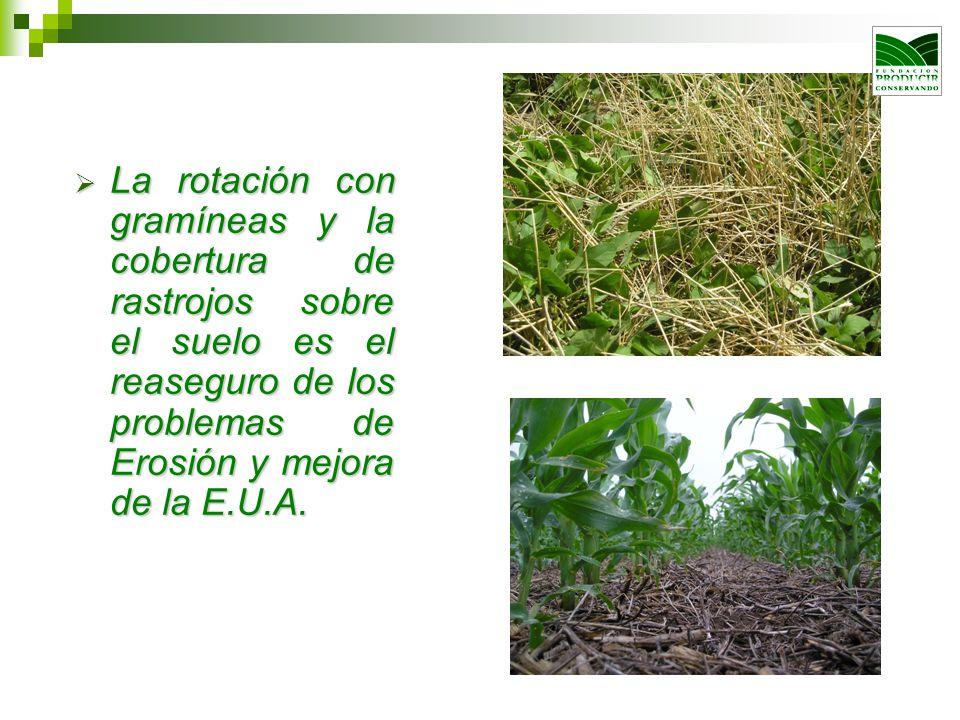 La rotación con gramíneas y la cobertura de rastrojos sobre el suelo es el reaseguro de los problemas de Erosión y mejora de la E.U.A.