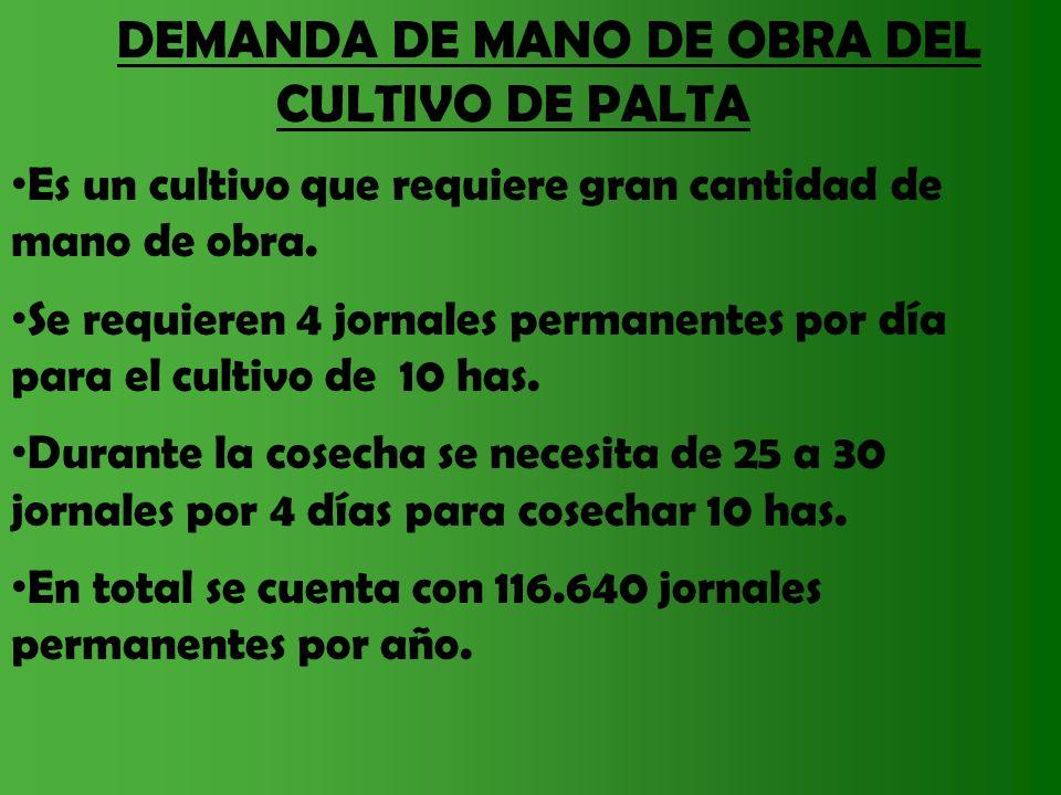 DEMANDA DE MANO DE OBRA DEL CULTIVO DE PALTA