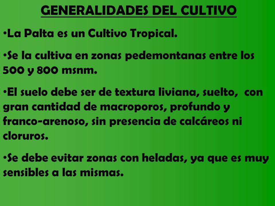 GENERALIDADES DEL CULTIVO