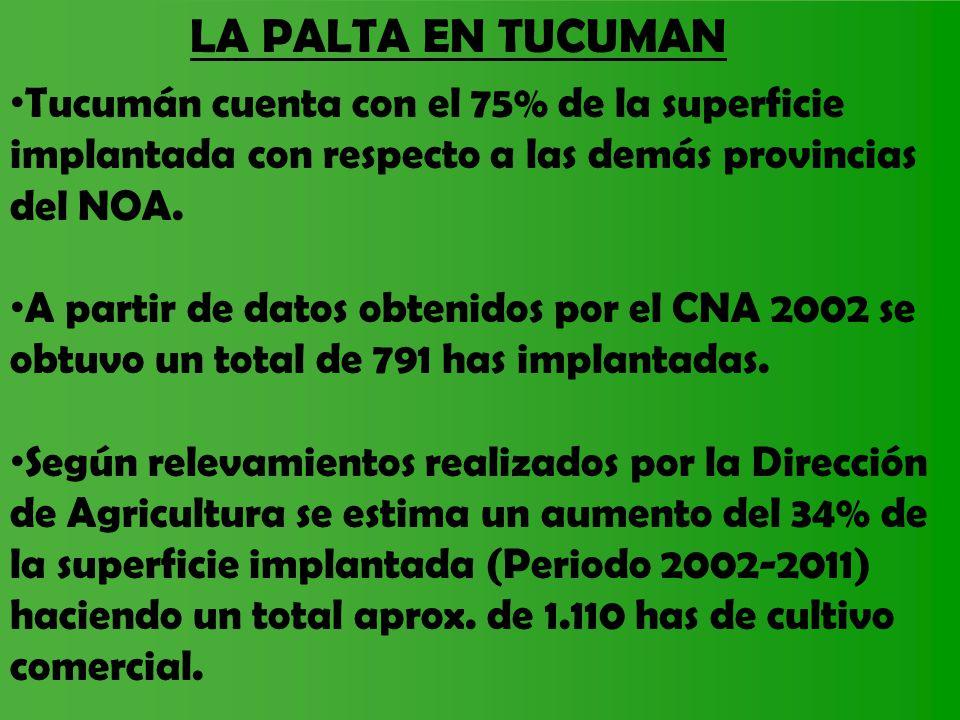 LA PALTA EN TUCUMAN Tucumán cuenta con el 75% de la superficie implantada con respecto a las demás provincias del NOA.