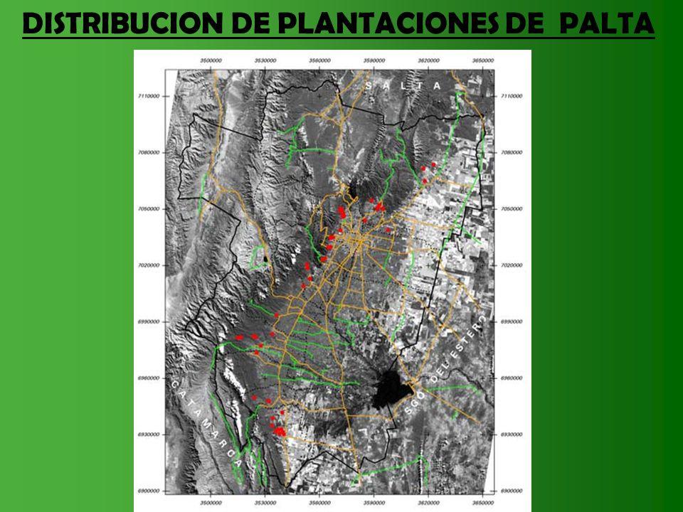 DISTRIBUCION DE PLANTACIONES DE PALTA