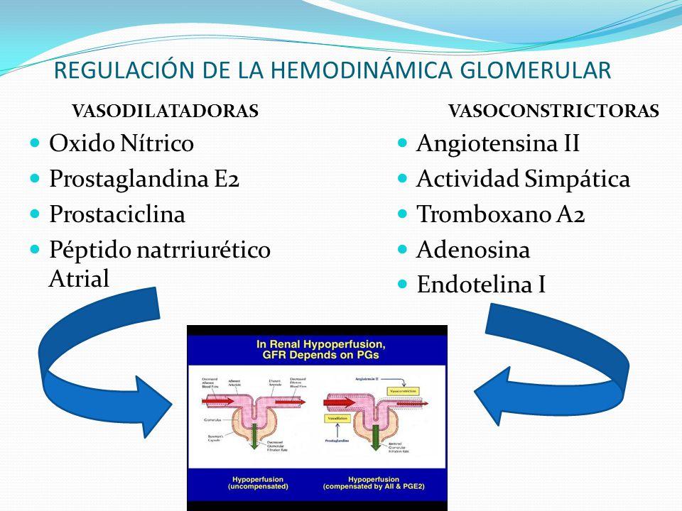 REGULACIÓN DE LA HEMODINÁMICA GLOMERULAR