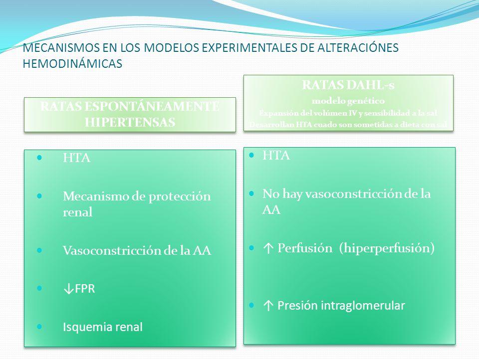 MECANISMOS EN LOS MODELOS EXPERIMENTALES DE ALTERACIÓNES HEMODINÁMICAS