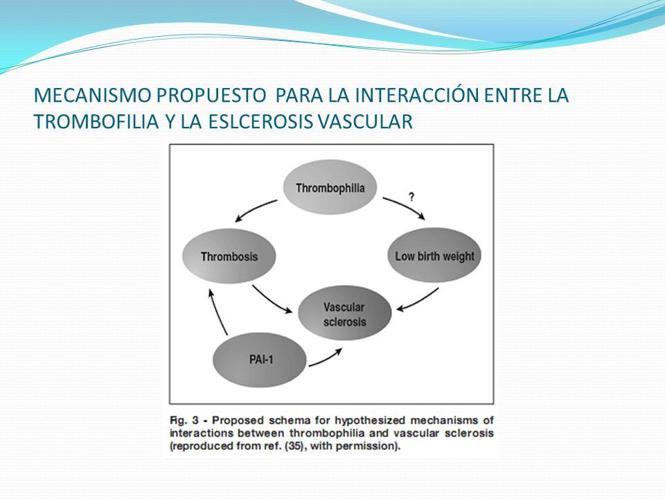 MECANISMO PROPUESTO PARA LA INTERACCIÓN ENTRE LA TROMBOFILIA Y LA ESLCEROSIS VASCULAR