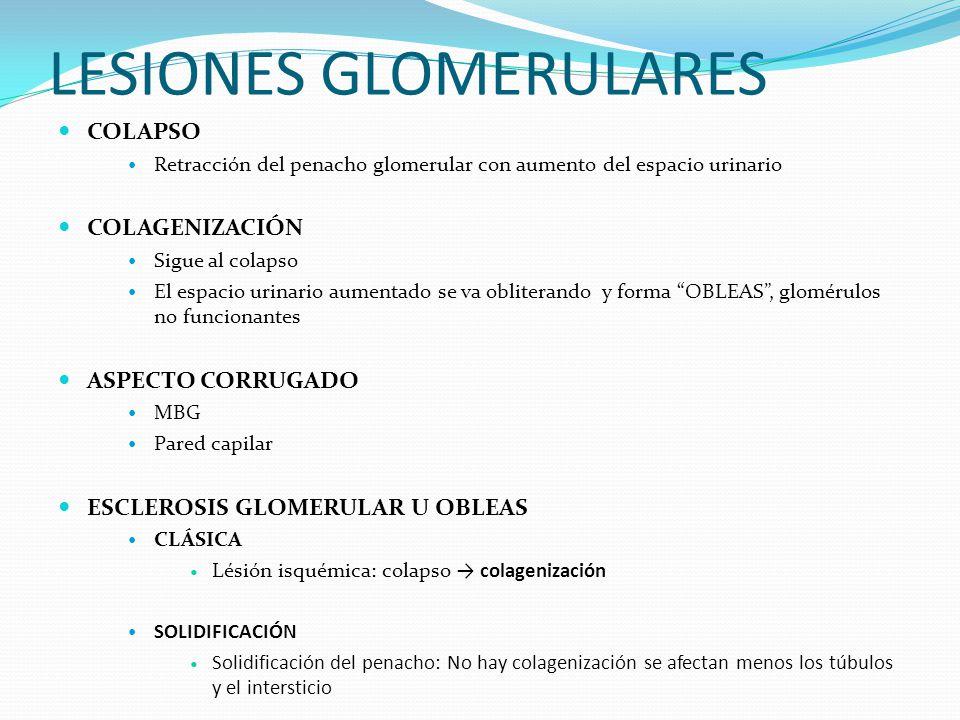 LESIONES GLOMERULARES