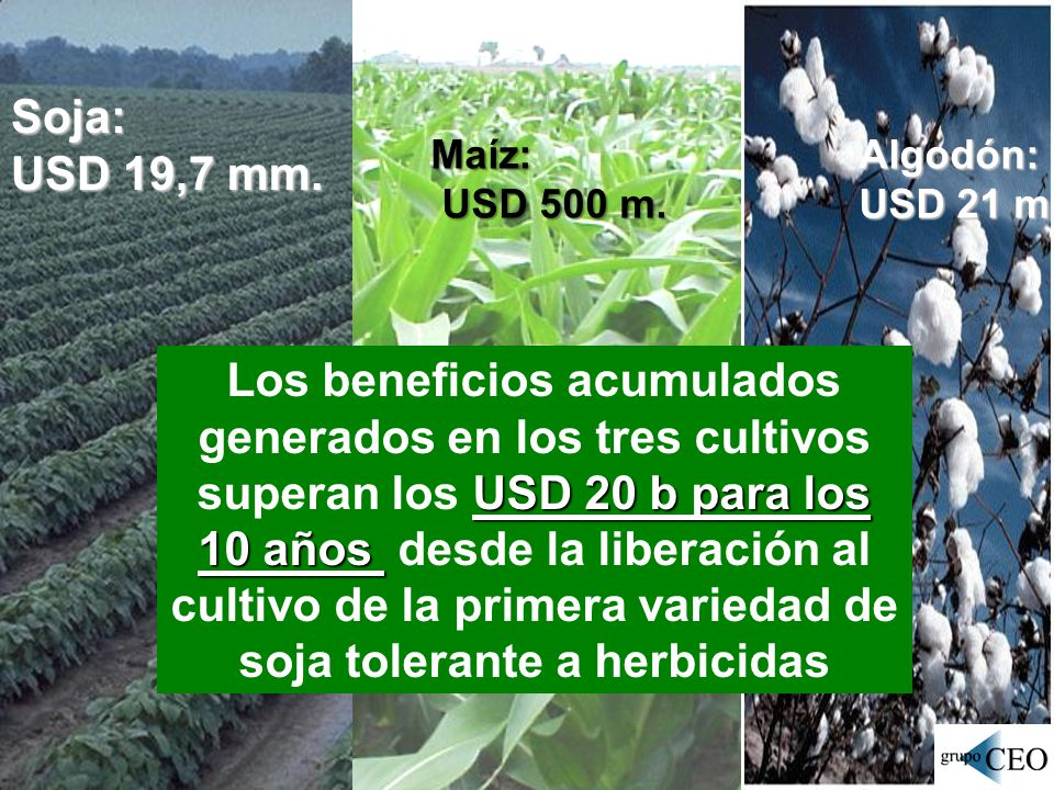 Soja: USD 19,7 mm. Maíz: USD 500 m. Algodón: USD 21 m.