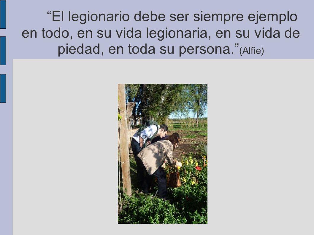 El legionario debe ser siempre ejemplo en todo, en su vida legionaria, en su vida de piedad, en toda su persona. (Alfie)