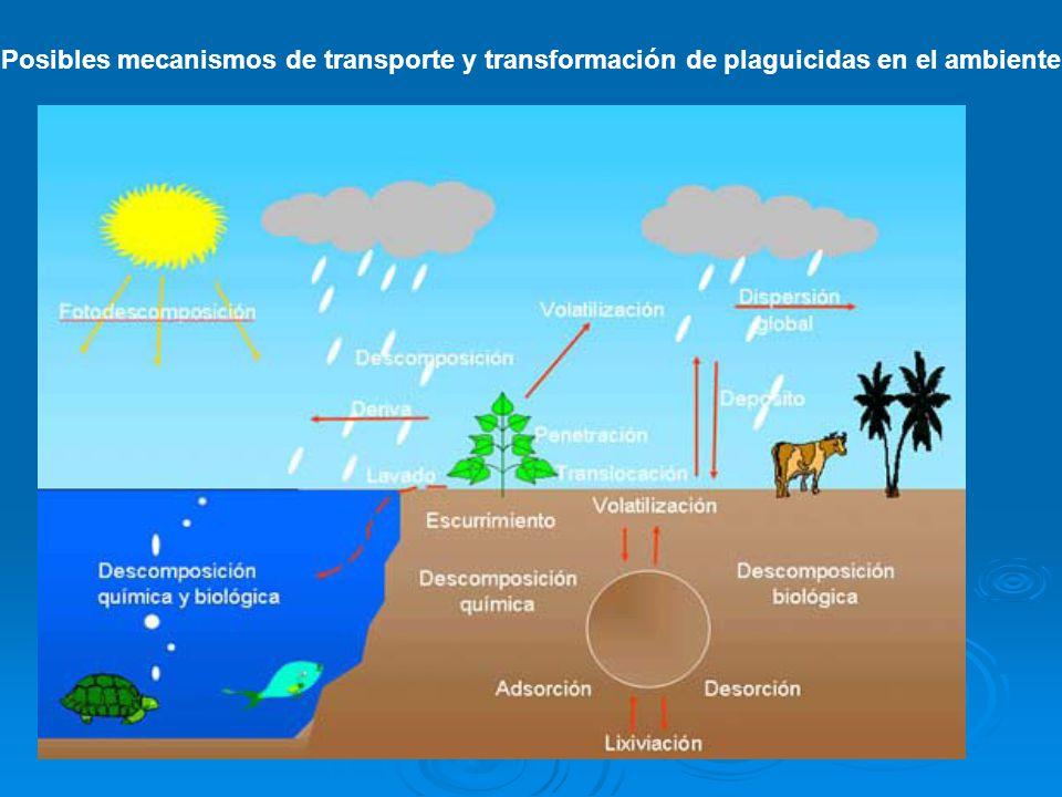 Posibles mecanismos de transporte y transformación de plaguicidas en el ambiente