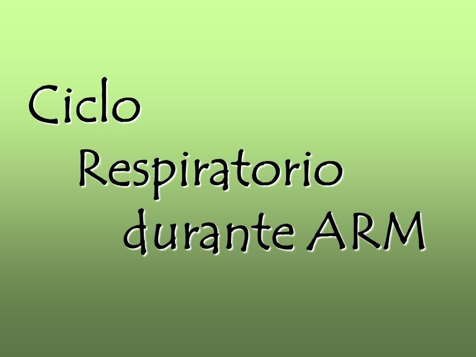 Ciclo Respiratorio durante ARM