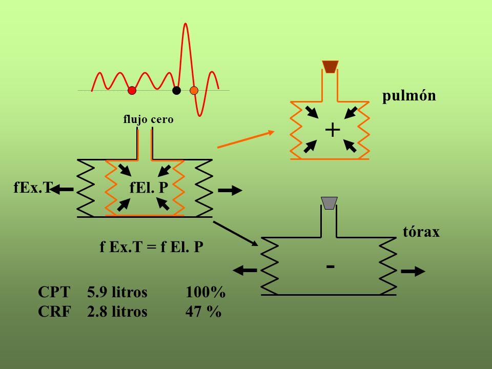 + - pulmón fEx.T fEl. P f Ex.T = f El. P tórax CPT 5.9 litros 100%
