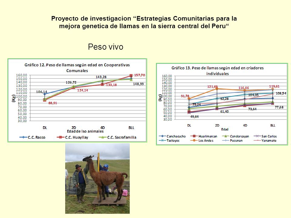 Proyecto de investigacion Estrategias Comunitarias para la mejora genetica de llamas en la sierra central del Peru
