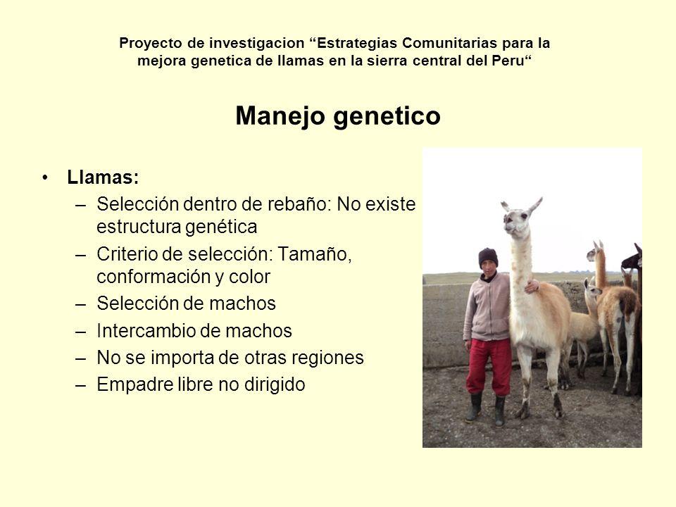 Manejo genetico Llamas: