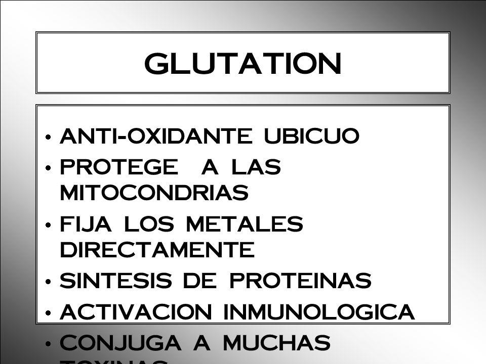 GLUTATION ANTI-OXIDANTE UBICUO PROTEGE A LAS MITOCONDRIAS