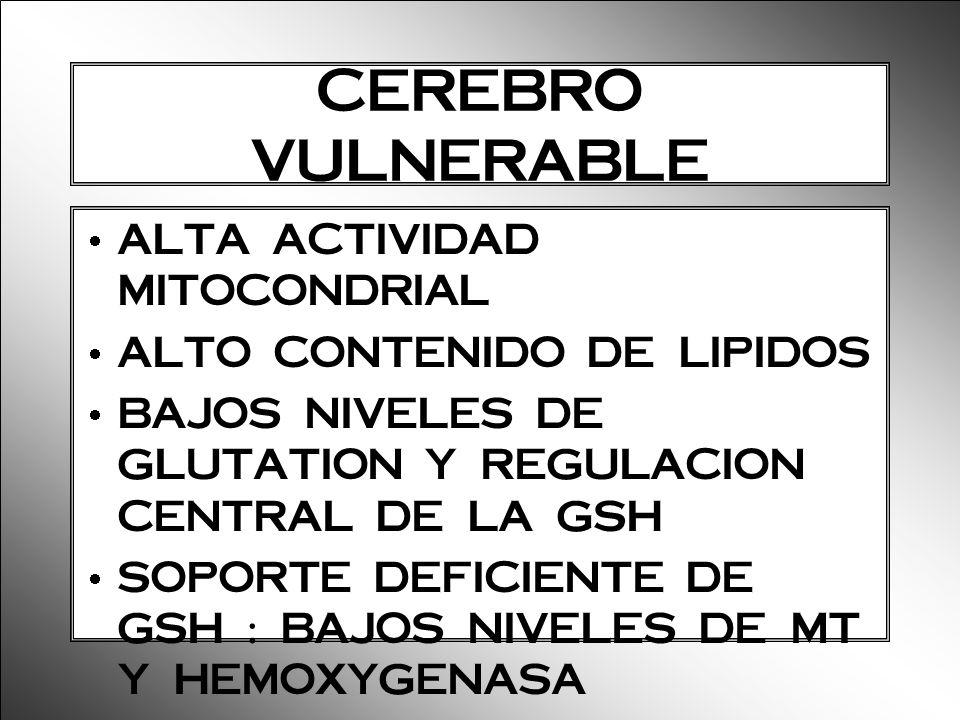 CEREBRO VULNERABLE ALTA ACTIVIDAD MITOCONDRIAL