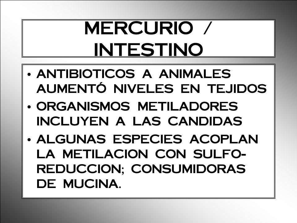 MERCURIO / INTESTINO ANTIBIOTICOS A ANIMALES AUMENTÓ NIVELES EN TEJIDOS. ORGANISMOS METILADORES INCLUYEN A LAS CANDIDAS.