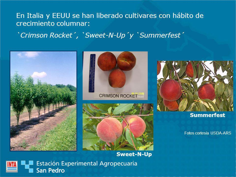 `Crimson Rocket´, `Sweet-N-Up´y `Summerfest´