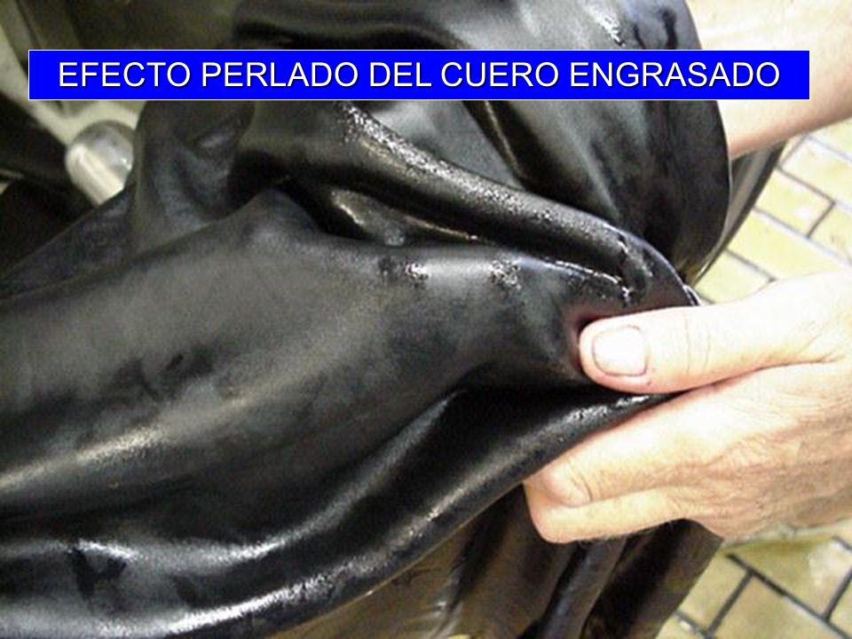 EFECTO PERLADO DEL CUERO ENGRASADO