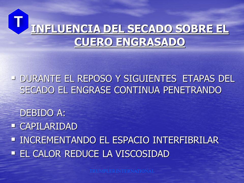 INFLUENCIA DEL SECADO SOBRE EL CUERO ENGRASADO