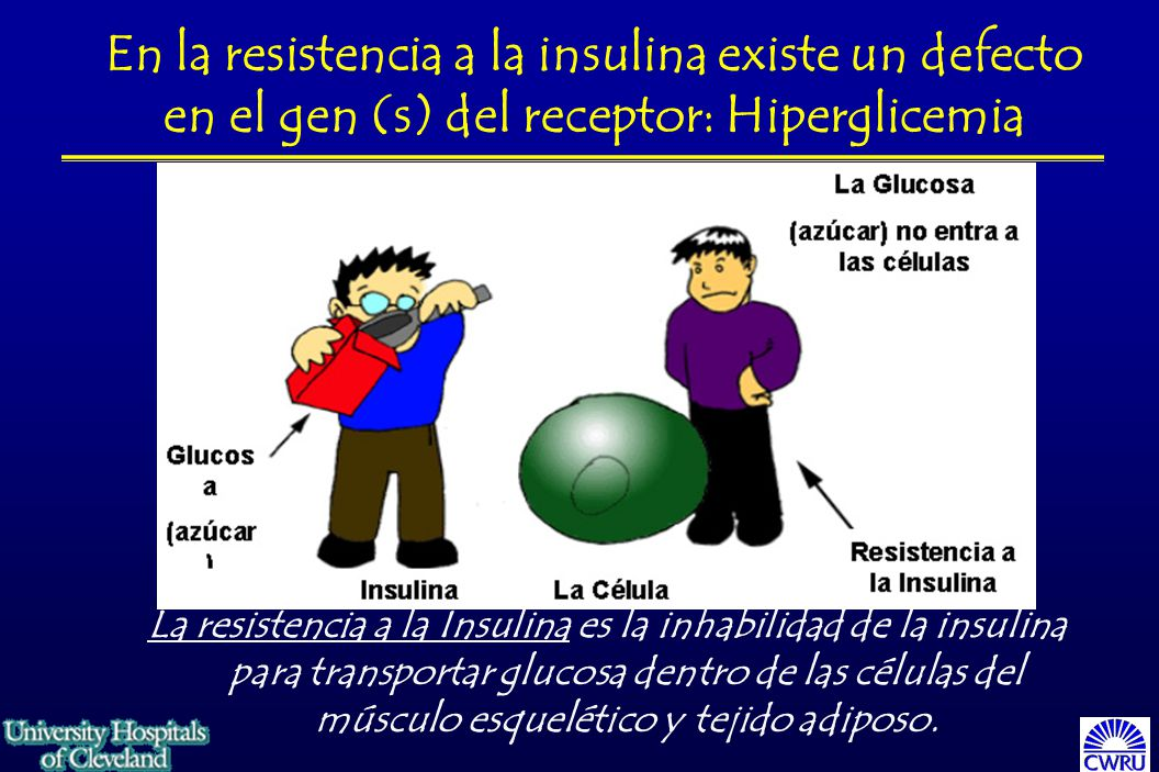 (azúcar) no entra a las células Resistencia a la Insulina