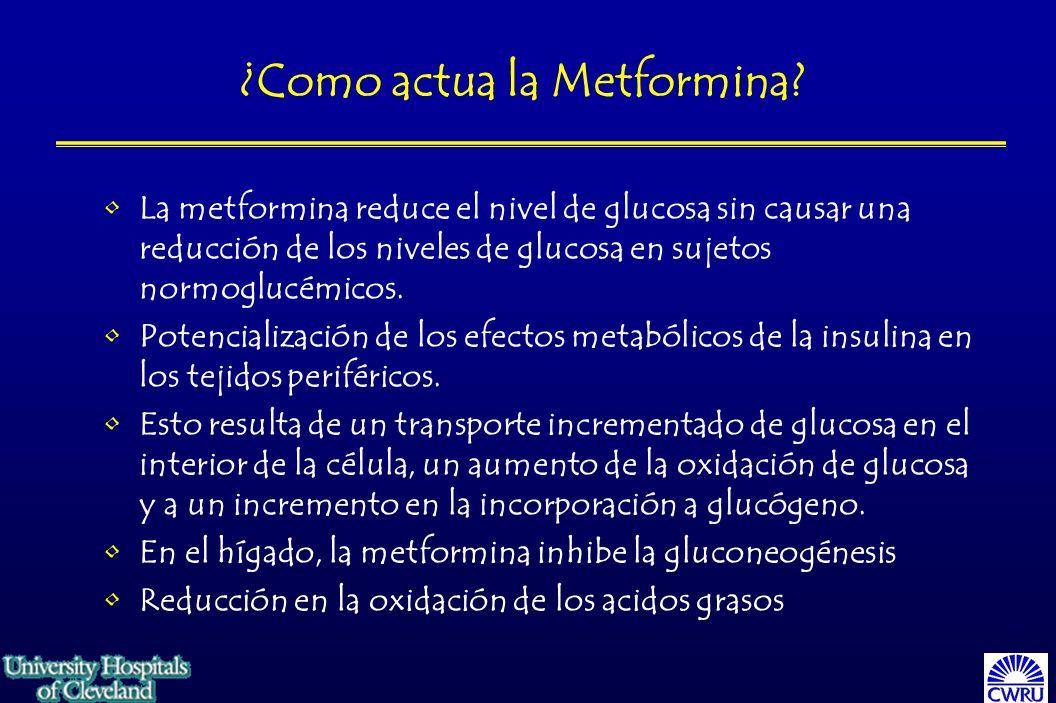 ¿Como actua la Metformina