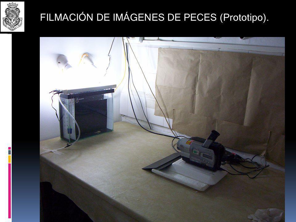 FILMACIÓN DE IMÁGENES DE PECES (Prototipo).