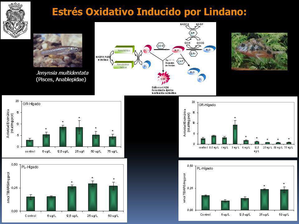 Estrés Oxidativo Inducido por Lindano: