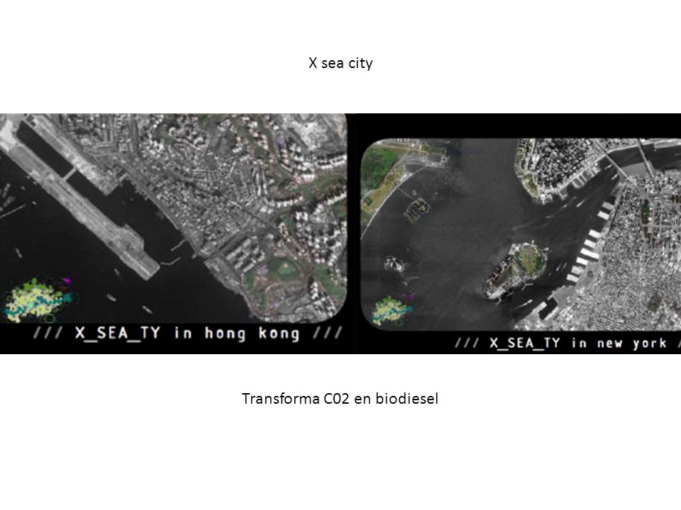 Transforma C02 en biodiesel