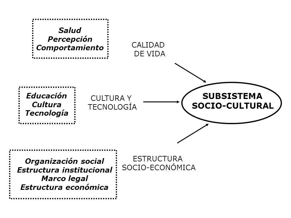 Estructura institucional