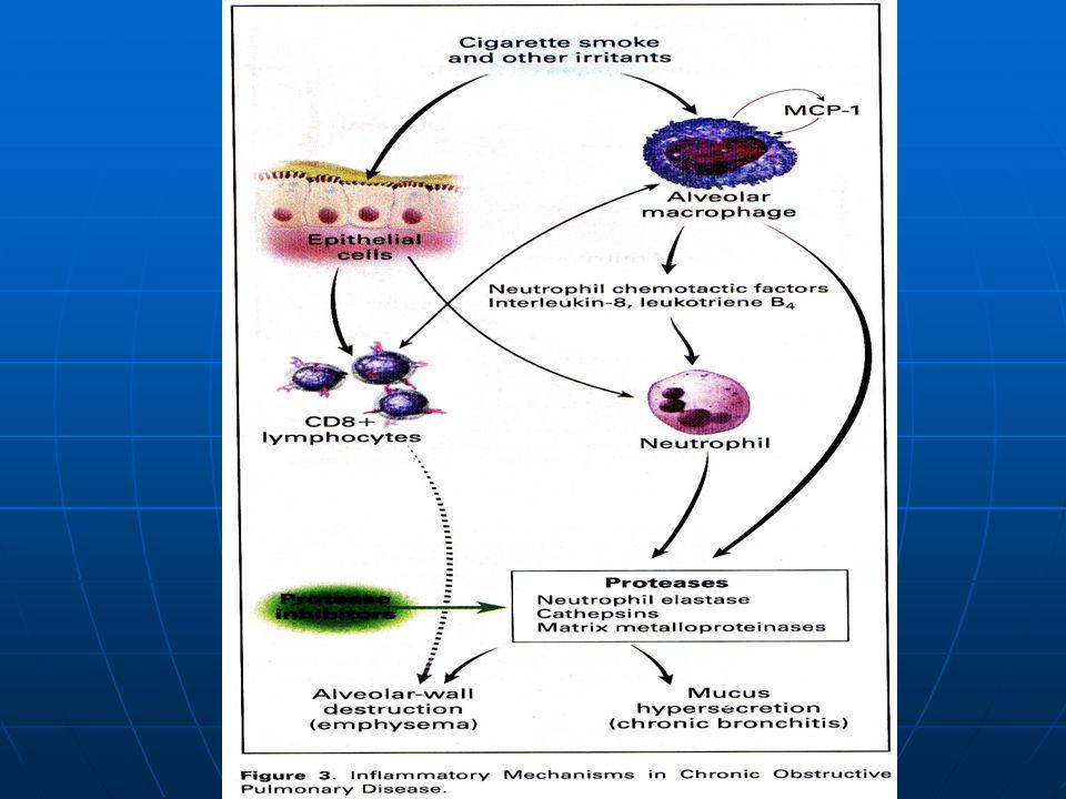 El cigarrillo y otros irritantes activan macrófagos y células epiteliales de la vía aérea, los cuales liberan mfactores neutrofilos quimiotacticos, incluyendo IL 8 y leucotrienos B4.L Los neutrofilos y macrofagos luego liberan proteasas que derriban el tej.
