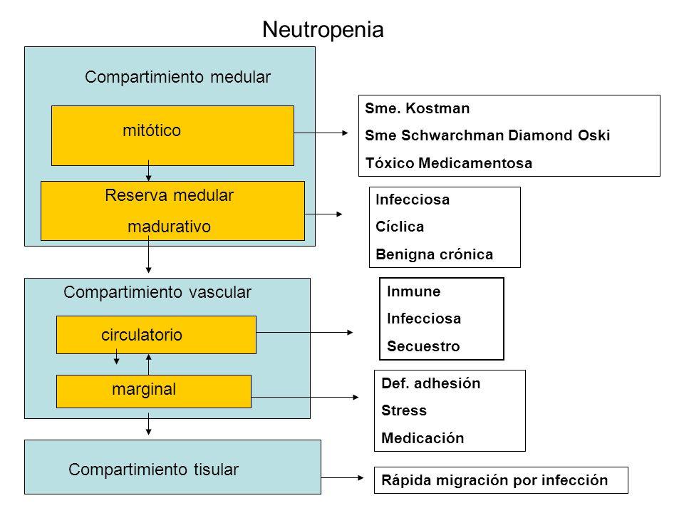 Neutropenia Compartimiento medular mitótico Reserva medular madurativo