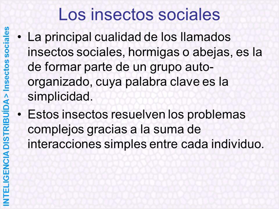 Los insectos sociales