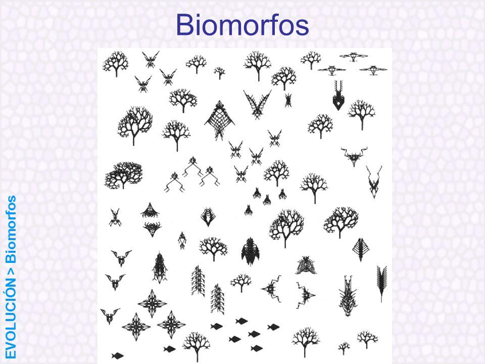 Biomorfos EVOLUCIÓN > Biomorfos