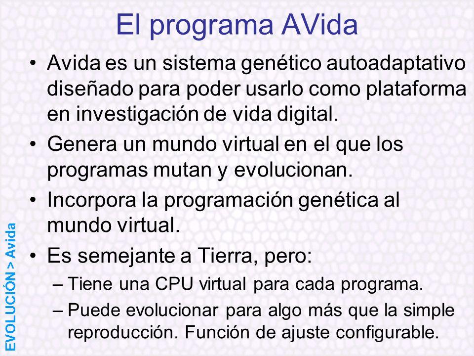 El programa AVidaAvida es un sistema genético autoadaptativo diseñado para poder usarlo como plataforma en investigación de vida digital.