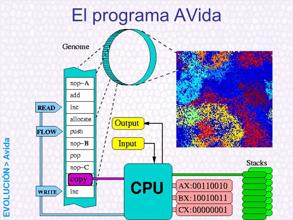 El programa AVida EVOLUCIÓN > Avida