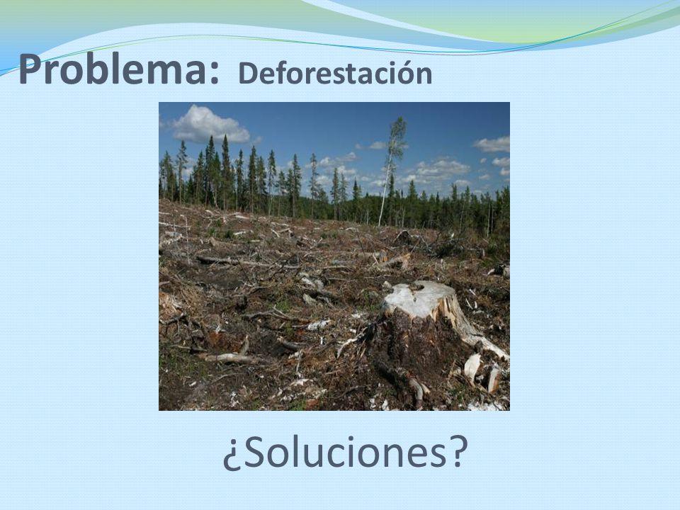 Problema: Deforestación