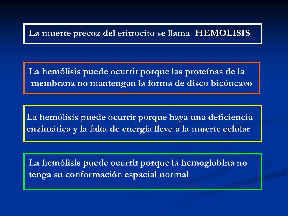 La muerte precoz del eritrocito se llama HEMOLISIS