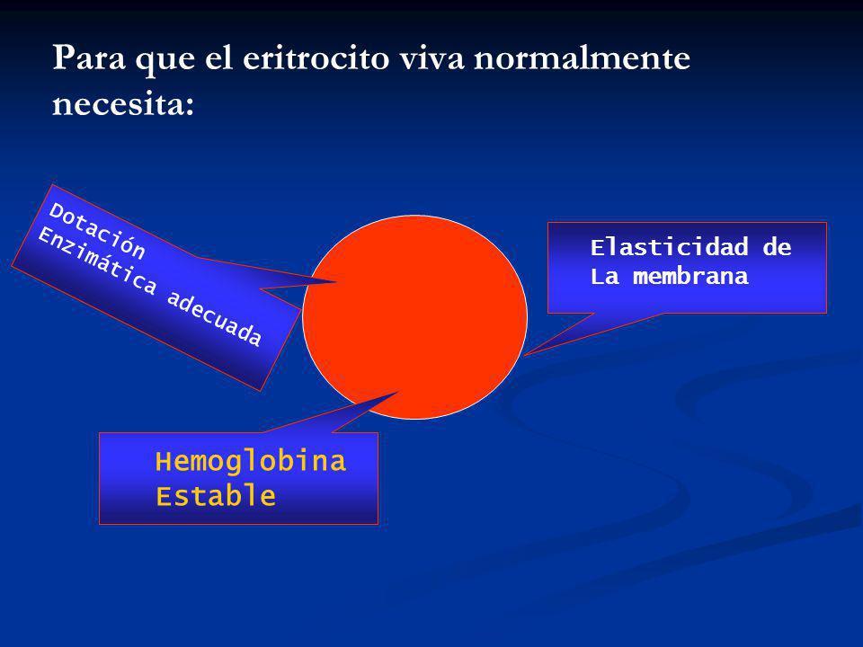 Para que el eritrocito viva normalmente necesita:
