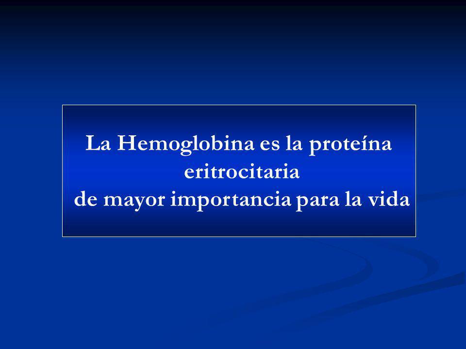 La Hemoglobina es la proteína de mayor importancia para la vida