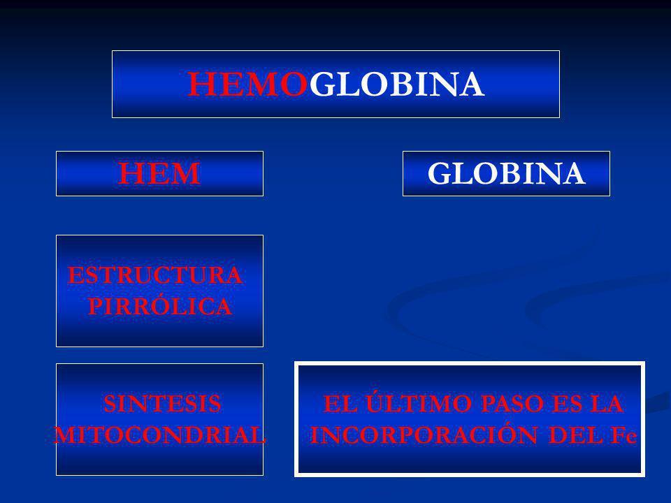 HEMOGLOBINA HEM GLOBINA ESTRUCTURA PIRRÓLICA SINTESIS MITOCONDRIAL