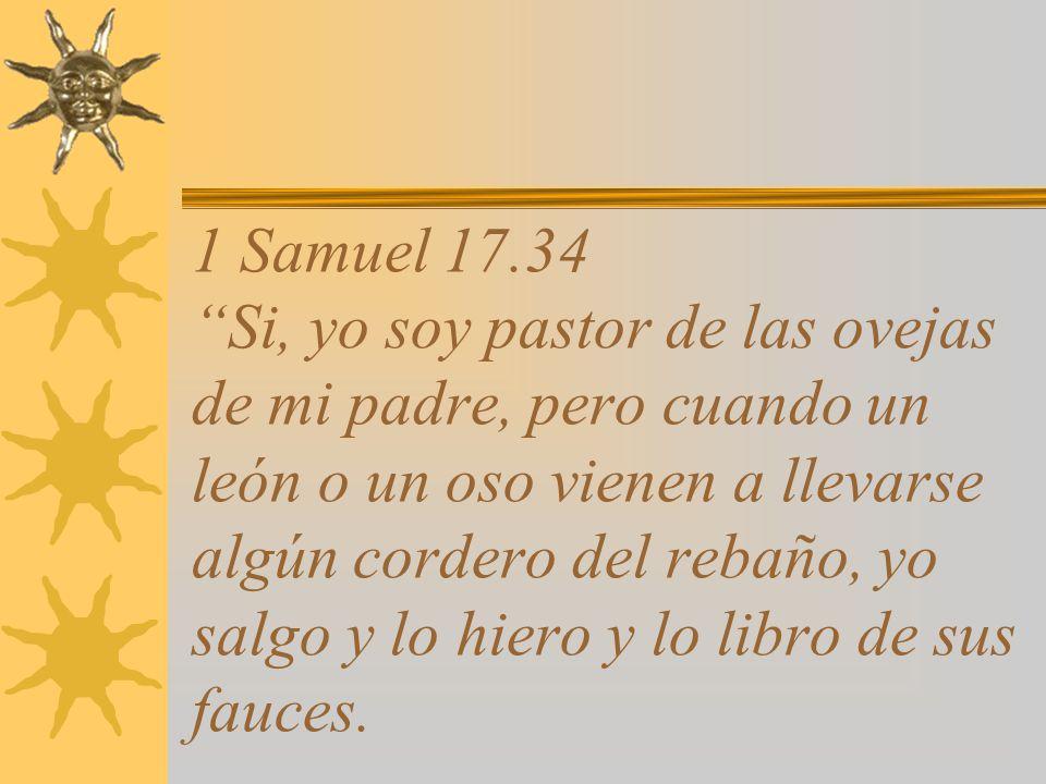 1 Samuel 17.34 Si, yo soy pastor de las ovejas de mi padre, pero cuando un león o un oso vienen a llevarse algún cordero del rebaño, yo salgo y lo hiero y lo libro de sus fauces.
