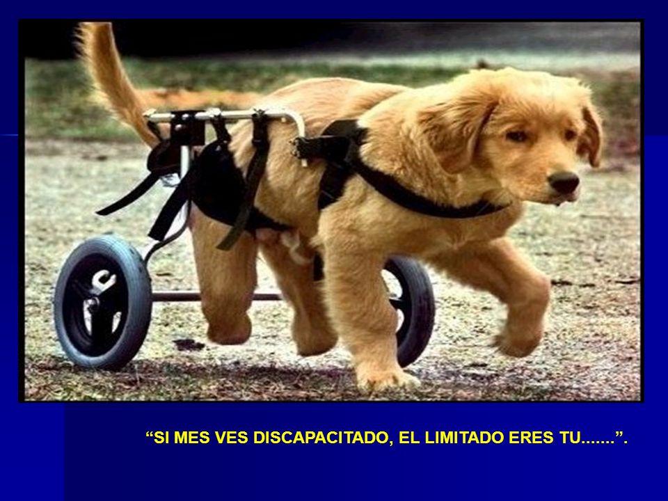 SI MES VES DISCAPACITADO, EL LIMITADO ERES TU....... .