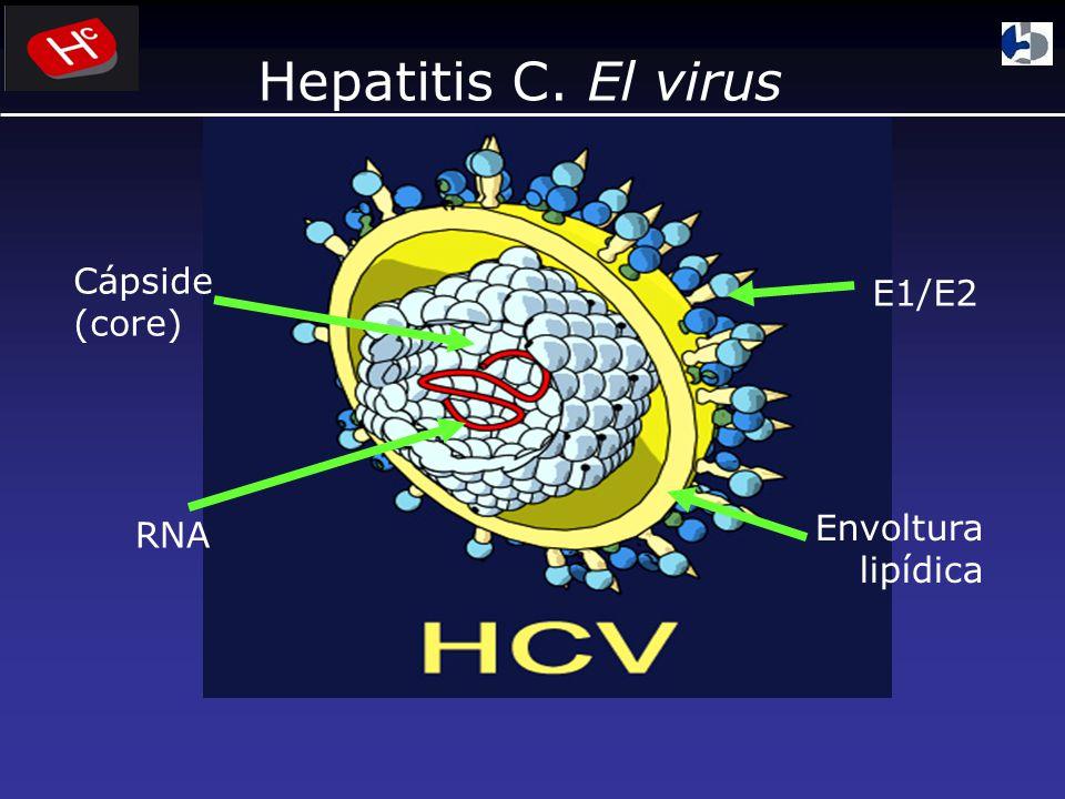 Hepatitis C. El virus Cápside (core) E1/E2 RNA Envoltura lipídica
