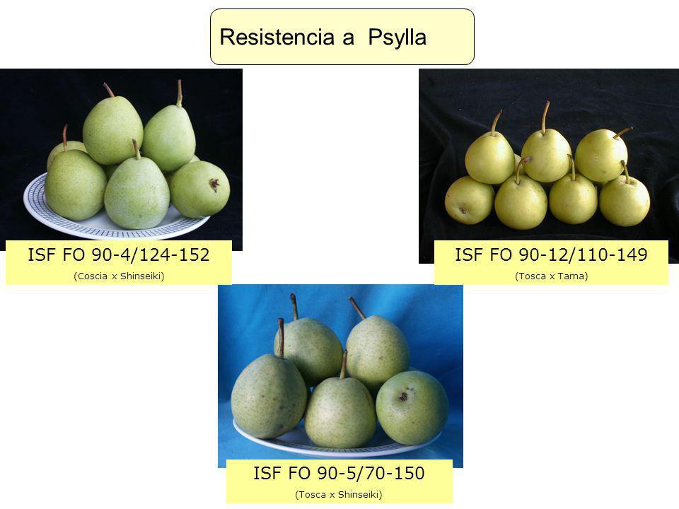 Resistencia a Psylla ISF FO 90-4/124-152 ISF FO 90-12/110-149