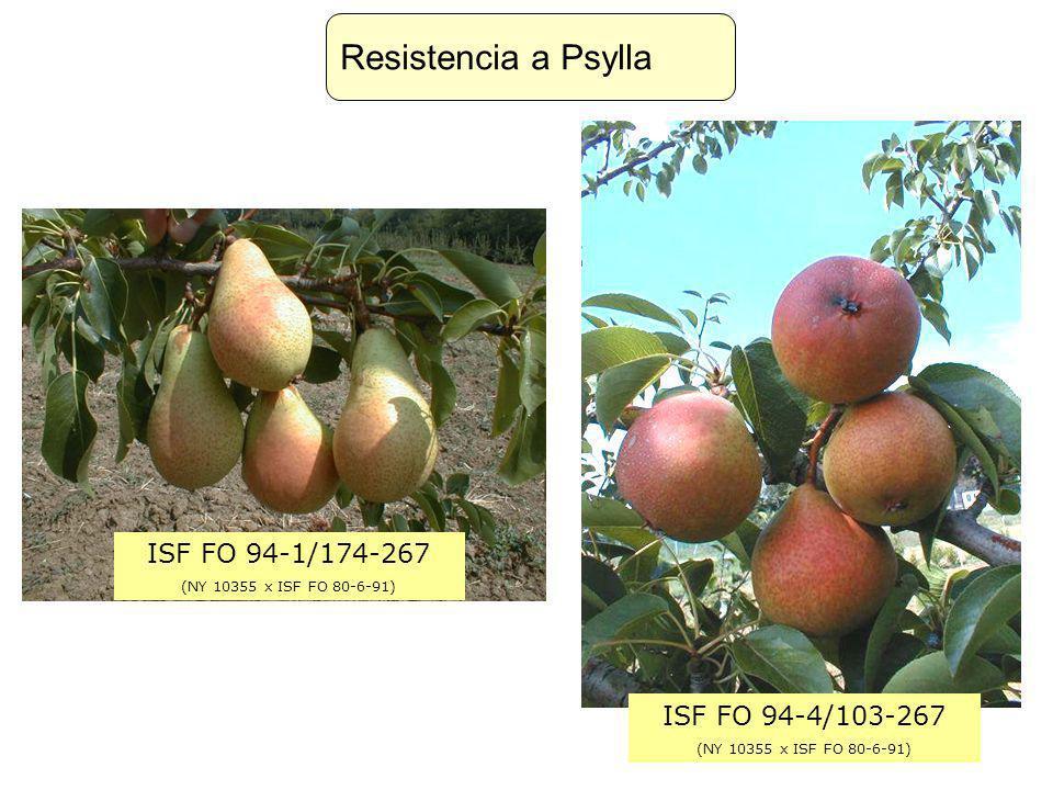 Resistencia a Psylla ISF FO 94-1/174-267 ISF FO 94-4/103-267