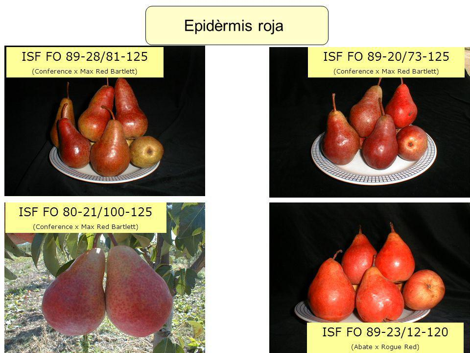 Epidèrmis roja ISF FO 89-28/81-125 ISF FO 89-20/73-125