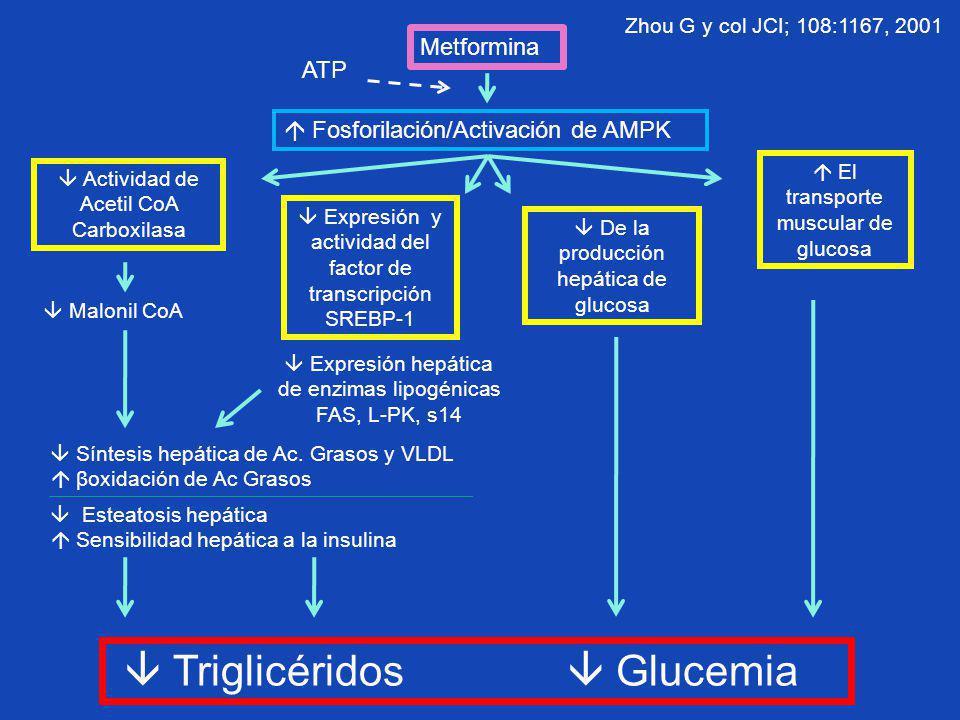 Triglicéridos  Glucemia